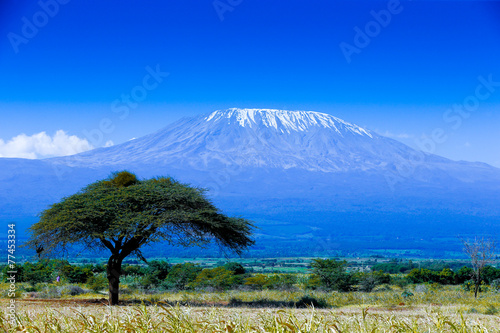 Photo Stands Africa Kilimanjaro landscape