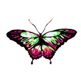 Fototapeta Motyle - butterfly448