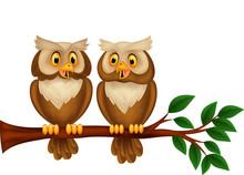 Cartoon Couple Owl On A Branch