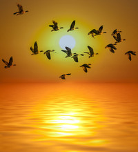Golden Sunset And Sea And Birds