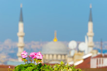 Flower At A Balcony With Istanbul Cityscape In Background
