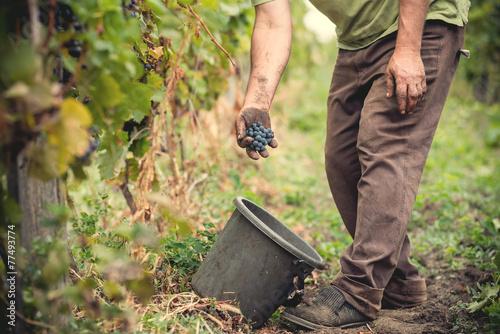 Fotografía  man working in a vineyard