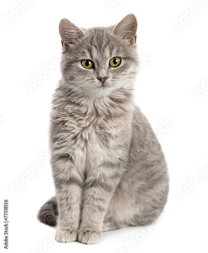 Fototapeta Gray cat sitting obraz