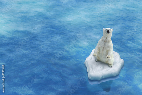 Poster Turquoise Ours Blanc / Fonte des glaces
