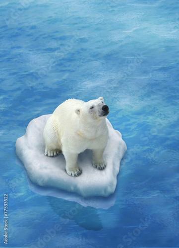 niedzwiedz-polarny-lody-topniejace