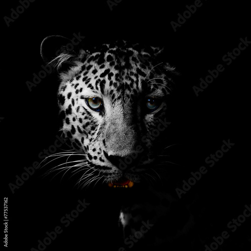 Staande foto Afrika Leopard portrait