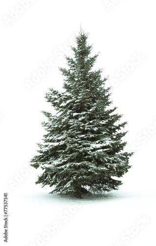 Fotografija  Christmas Tree