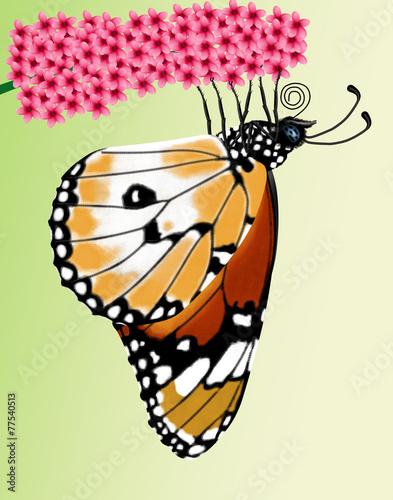 Fotografie, Obraz  butterfly, danaus chrysippus