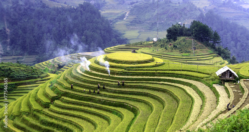 Photo Stands Rice fields terraced rice fields with water in Mu Cang Chai