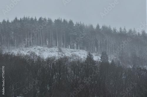 Printed kitchen splashbacks Reflection Sapins enneigés en haut de la colline