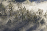 Promienie słońca padające przez mgłę w lesie - 77572725