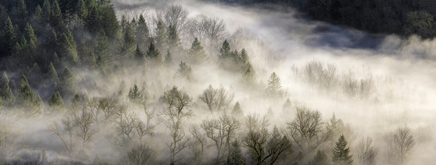 Fog Rolling Over Forest in Oregon