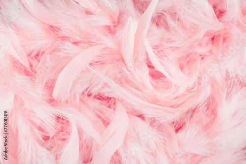 Foto op Aluminium Flamingo Pink feathers background