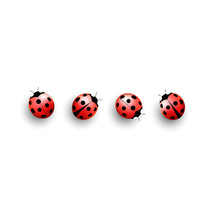 Four Lady Bugs Isolated On White Background