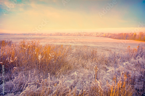 Poster Zalm winter landscape at sunset. Field with dry grass