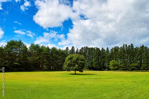 Foto op Plexiglas Landschappen 一本の木と周りの林の光景