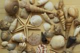 mix of shells