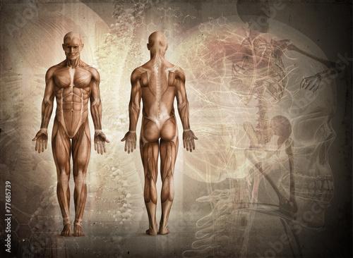 Láminas  human body