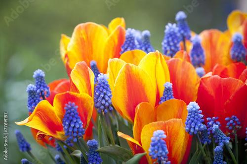 Beautiful multiflowers bed in garden, Holland