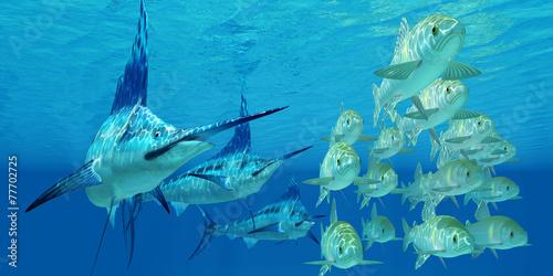 Fotografía Marlin attack Ayu Fish