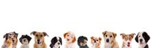 Verschiedene Hundeköpfe In Der Reihe