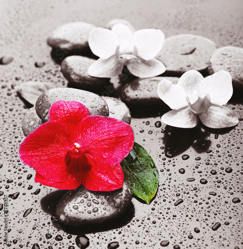 piekna-kwitnaca-orchidea-z-zdrojow-kamieniami-na-popielatym-tle