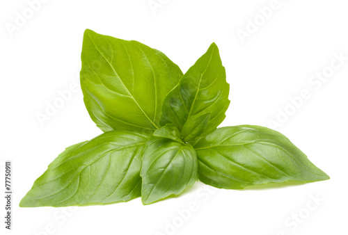 Cuadros en Lienzo Sweet basil leaves