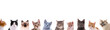 canvas print picture - Verschiedene Katzenköpfe in der Reihe