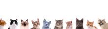 Verschiedene Katzenköpfe In D.