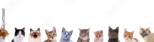 Photo Verschiedene Katzenköpfe in der Reihe