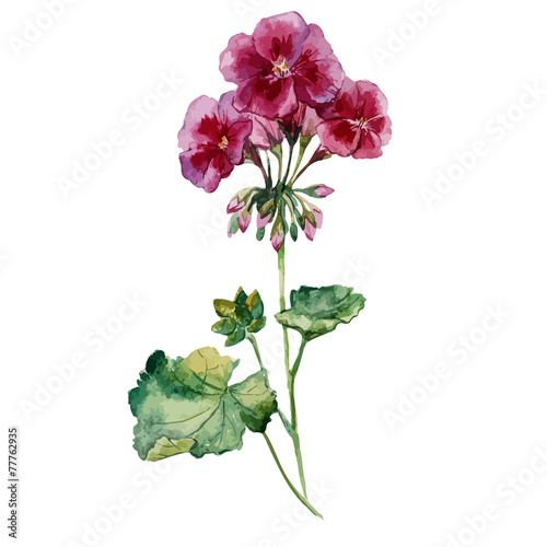 geranium, watercolor, pattern Wallpaper Mural