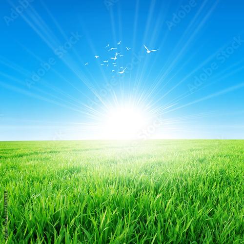 Deurstickers Gras Spring field under the morning sun