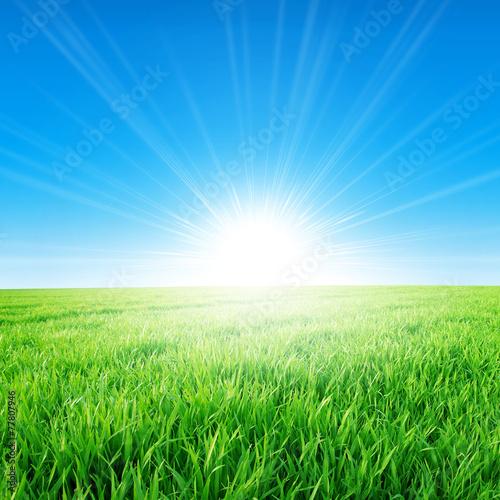 Deurstickers Gras Fresh field of green grass growing slowly under the rising sun