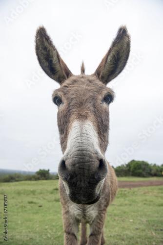 Deurstickers Ezel funny donkey face