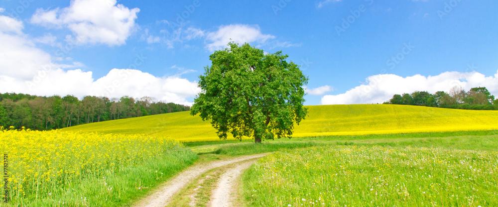 Fototapeta Feldweg im Frühling - Bodenseeregion