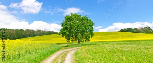 Obraz Feldweg im Frühling - Bodenseeregion - fototapety do salonu