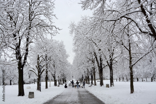 Fototapety, obrazy: Trees with snow in winter park
