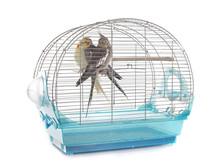 Cockatiel In Cage