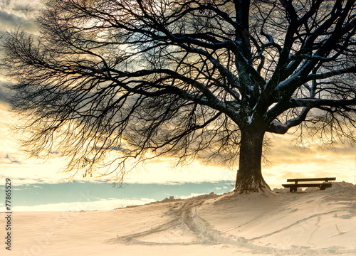 bench under a tree (97)