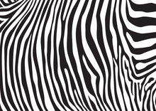 Zebra Stripes Pattern, Illustr...