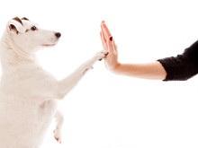 High Five Between A Dog And A ...