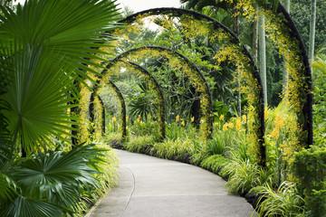 Fototapeta Botanical Garden path