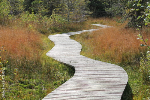 Foto op Canvas Weg in bos chemin en bois