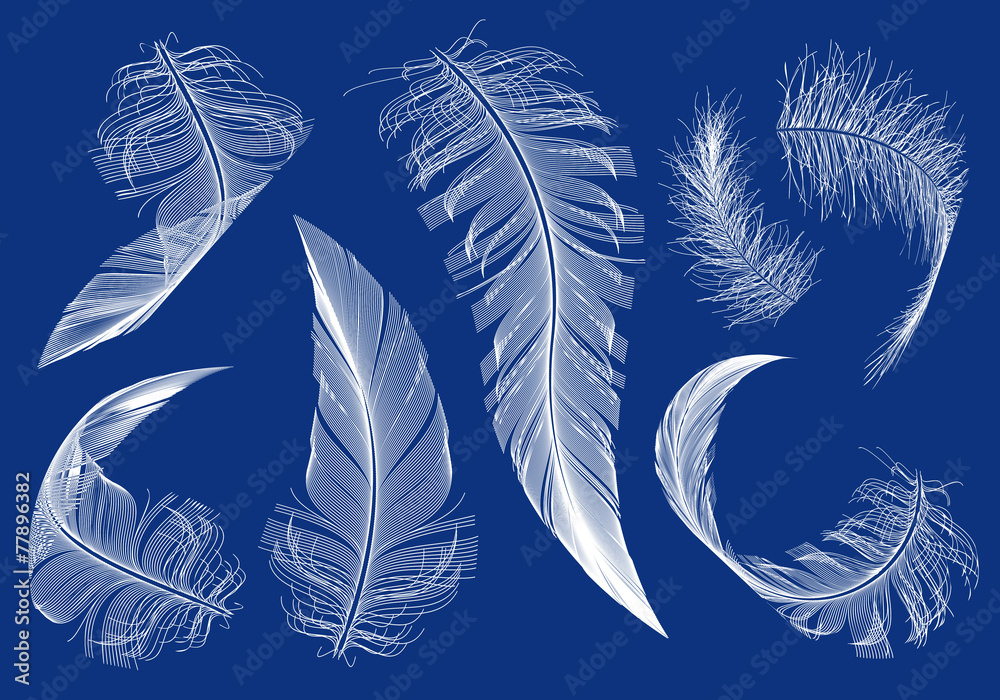 Photo  flying feathers, vector set