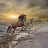 Fototapeta Konie - horses coming out of the sea