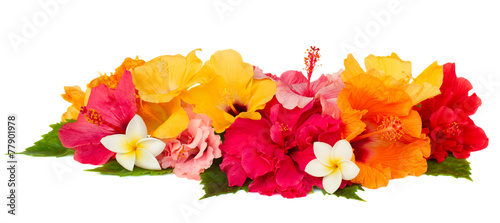 border of colorful hibiscus flowers