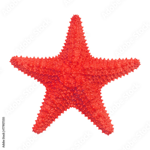 Fotografie, Obraz Caribbean starfish isolated on white background.