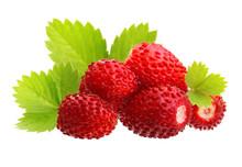 Wild Strawberry Macro