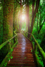 Wood Ways In Mountain Rain For...
