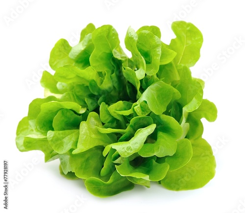 Fototapeta Salad isolated on white background .Salad leafs obraz